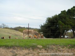 donkey-goat farm