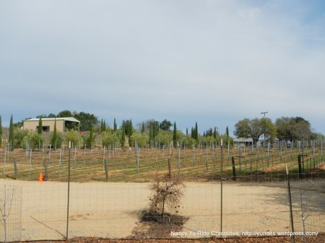 Adelaida Cellars vineyards