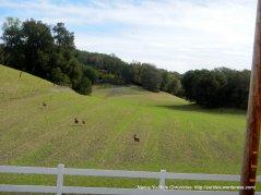 deer crossing the field