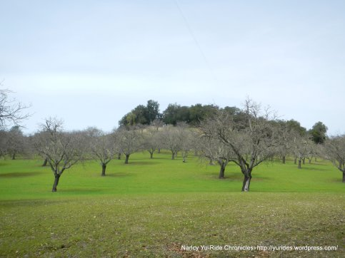 nut orchards