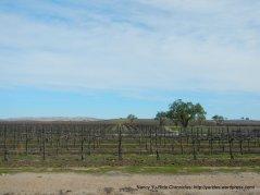 Jardine Rd vineyards