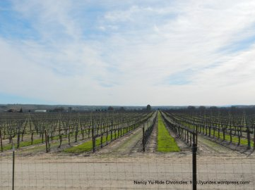 Tower Rd vineyards