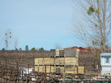 packing crates-Hog Heaven Winery