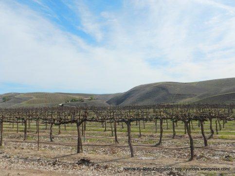 gorgeous vineyards