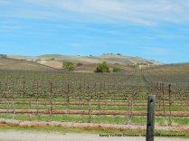 Chalome Hills-vineyards