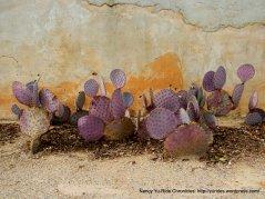 purple cacti