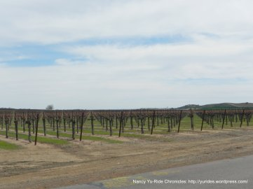 acres of vines