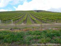 Cat Canyon hillside vineyards
