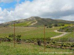 Cat Canyon vineyards