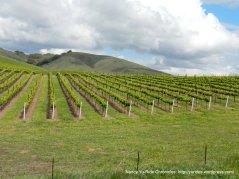 Solomon Hills vineyards