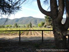 vineyard off CA-246