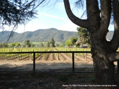 vineyard off CA-246