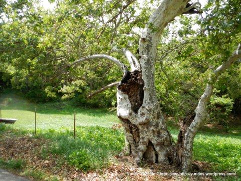 open tree trunk