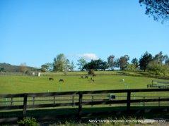 pastoral fields