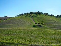 beautiful hillside vineayard