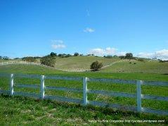 green meadows-pastoral field