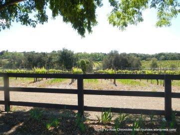 wine trail vineyard
