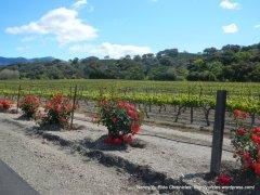 wine trail vineyards