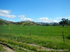 upper valley meadow