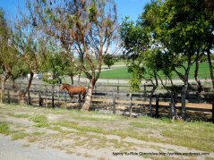 Alisos Canyon horse ranch