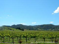 Alisos Canyon vineyard
