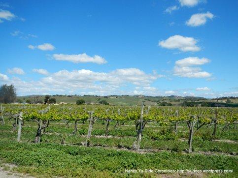 Alisos Canyon vineyards