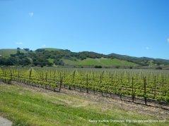 Drum Canyon vineyards