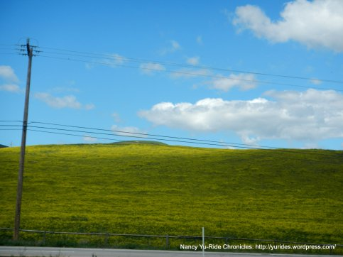 soft green yellow hills