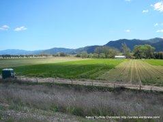 Windfield Farm