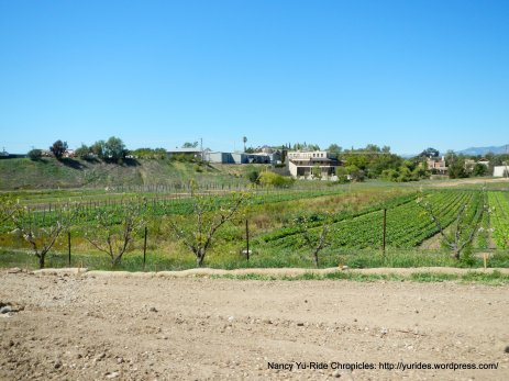 Santa Ynez Valley vineayrd