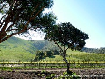 Santa Rosa vineyards