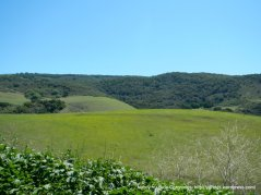 Palo Alto Hills