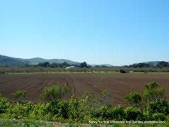 rich fields