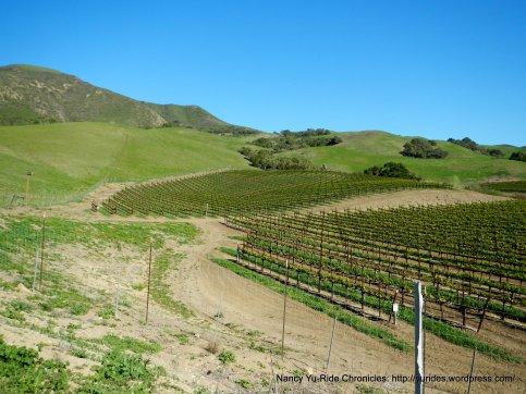 Santa Rosa Hill vineayrds