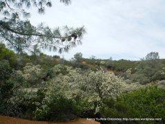 sweet honey scented white flowers