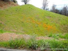 poppies & green slopes