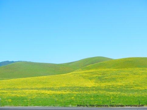 hillside mustards
