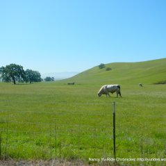 green pastoral land