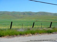soft green hills