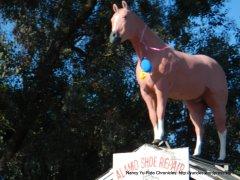 Alamo horse