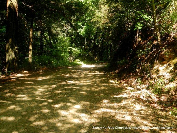 Old Railroad Grade-redwoods