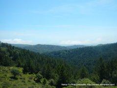 dense forest views