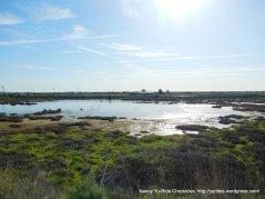 wetlands & sloughs