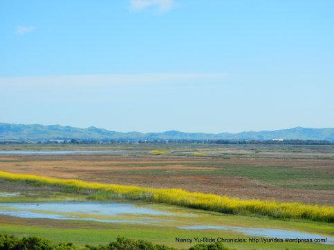 colorful marshes