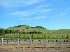 Mankas Corner vineyards