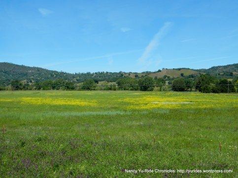 yellow green meadows
