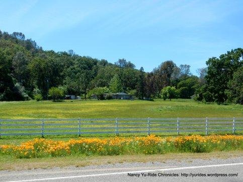 poppy lined ranchland