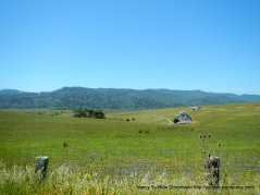 Tomales Bay open space