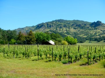 Napa Valley vineyards-Vaca Mtns