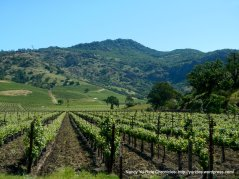 Napa Valley vineyard-Vaca Mtns